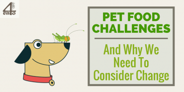 Pet Food Challenges – And Why We Need to Change