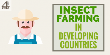 How Insect Farming Helps Farmers In Developing Countries